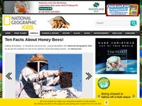 Ten Facts About Honey Bees