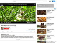 Honey Bees: Natural History 1