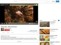 Honey Bees: Natural History 2